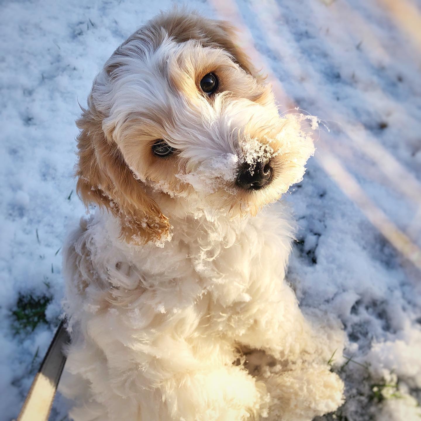 It's official..... Alfie loves the snow!