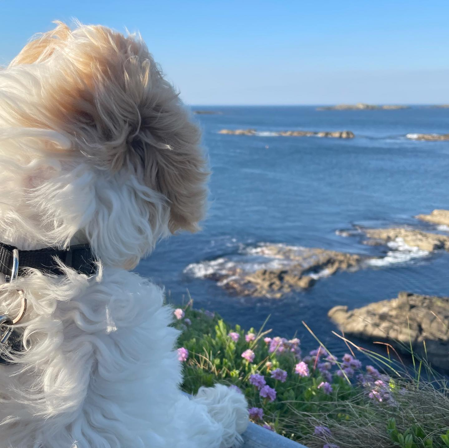 Glorious warm sunshine to explore the north coast with Alfie, the pup who loves to dig, dig, dig!